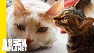 Mauhaus Cat Café Is A Cat Lover's Paradise!