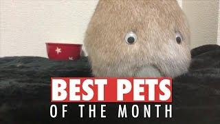 Best Pets of the Month Compilation | May 2018