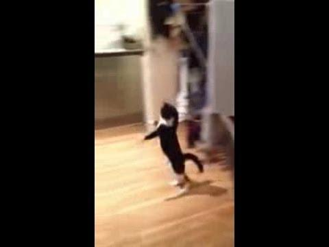 Cat Performs Top Secret Move Rarely Seen By Humans - Hilarious!