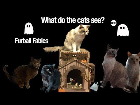 The Haunting of Meow - Cats Get Spooked