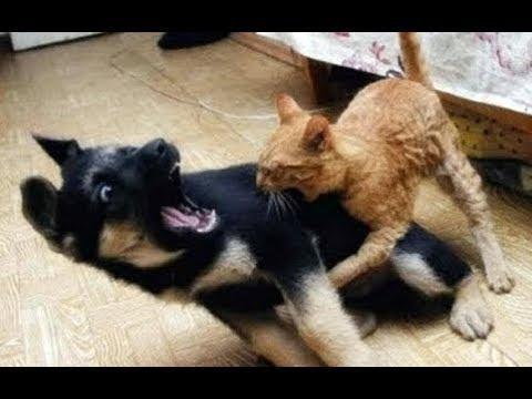 NINJA CATS vs DOGS - Who Wins?