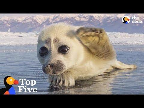 Seal Pup Waves To Photographer + Other Amazing Animal Encounters