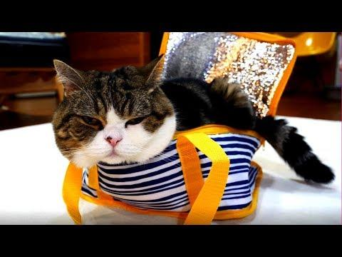 The cooler bag and Maru
