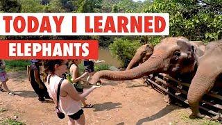 Today I Learned: Elephants