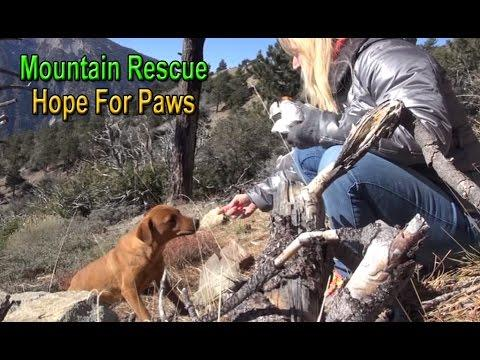 Mountain Rescue Of Three Scared Dogs