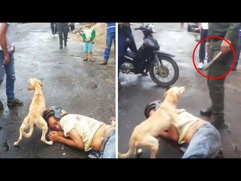 Take a Look at What Animals Do For Humans! This Will Melt Your Heart!