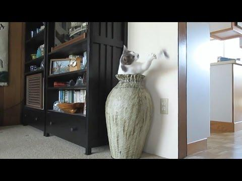 Cats In Jars Compilation