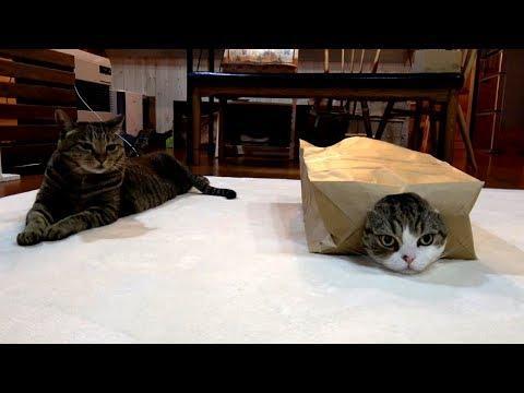 Maru and the big paper bag