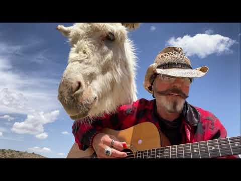 Donkey Named Heaven Is So Lonesome She Could Cry. Donkey Loves Live Music #Video