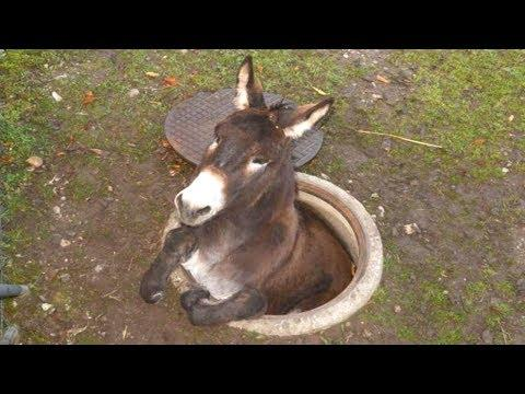 Donkey - A FUNNY DONKEY VIDEOS Compilation || Pets And Animals