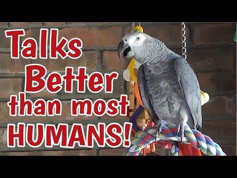 Einstein Parrot can talk better than most humans video
