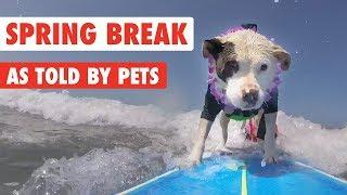 Spring Break Vacation Pets