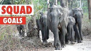 Squad Goals   Animal Video Compilation 2018
