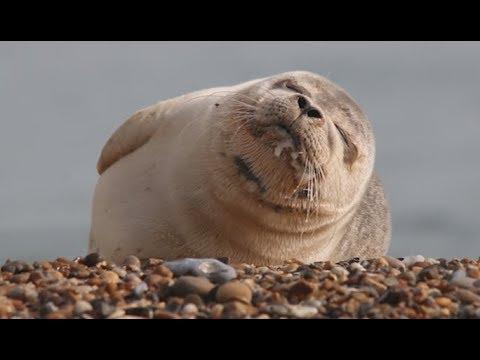 This Seal Can't Stop Sneezing - YOUR Daily Dose Of Internet