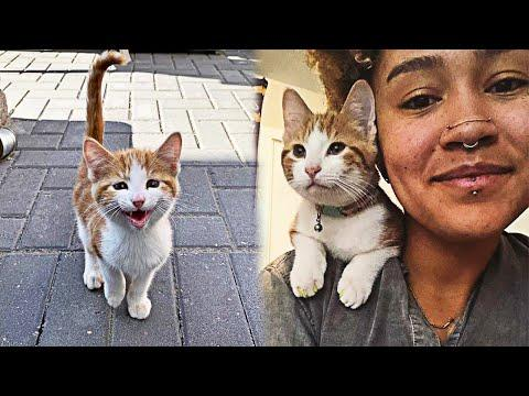 Stray Kitten Adopts a Woman, Leaving Her No Choice #Video
