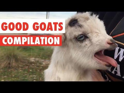 Good Goats Video Compilation 2016