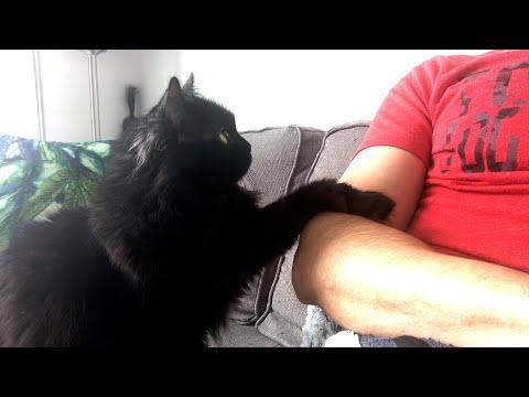 Pets, Please Video