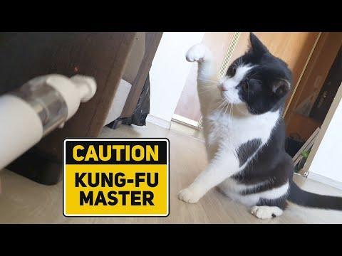 Don't take away my hair! Cat vs Vacuum cleaner Video
