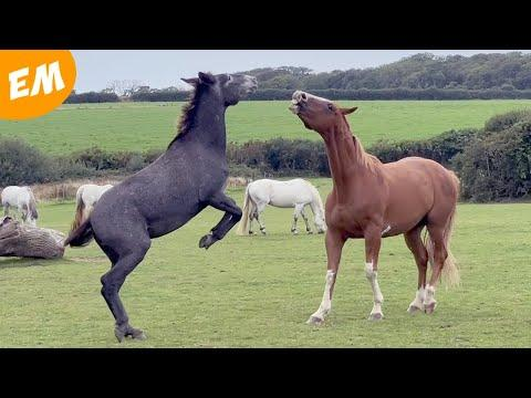 A mule with a BIG personality! Emma Massingale #Video