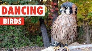 Dancing Birds | Funny Bird Video Compilation 2017