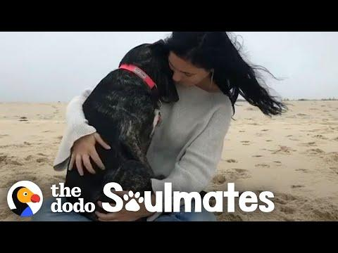 Woman Meets Her Soul Dog On Vacation | The Dodo Soulmates