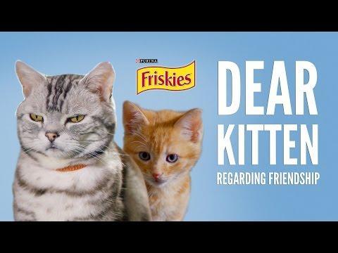 Dear Kitten: Regarding Friendship - The Cat.