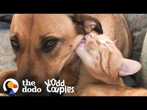 Watch This Dog And Cat Start Wrestling Each Other #Video