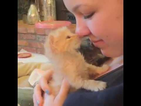 Cute Kitten Hugging Owner