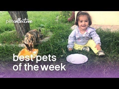 Best Pets of the Week - COPY CATS