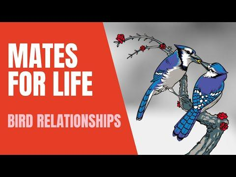Bird Relationships Video | Mates for Life