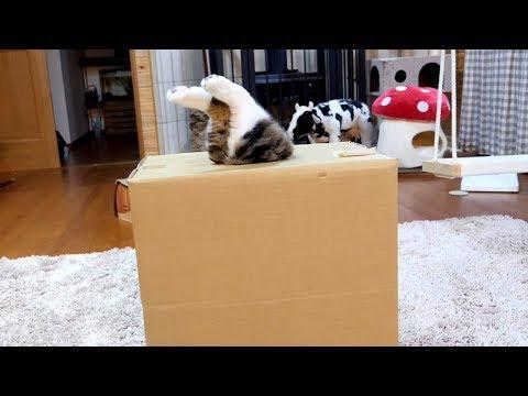 Maru could get into it, but couldn't get out