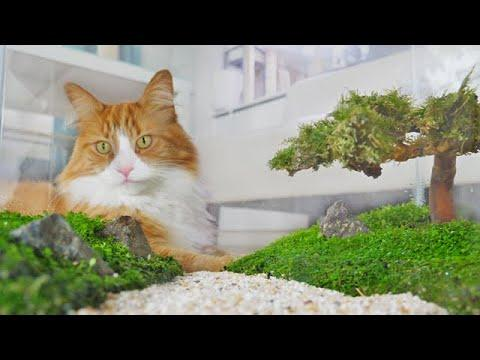 Guy Builds Bonsai Fish Tank While Cats Observe Every Move Video