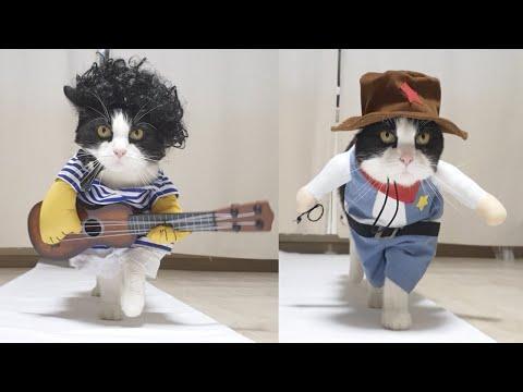 Real CatWalk. Episode 1 of 5. CatPusic Video