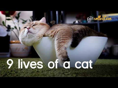 9 Lives Of Cats Video