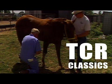 Traveling Veterinarian - Texas Country Reporter Video