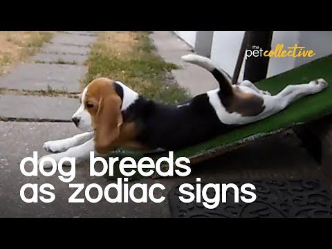 Dog Breeds As Zodiac Signs Video
