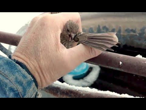 Man Saves Frozen Bird Stuck To Fence. Your Daily Dose Of Internet.