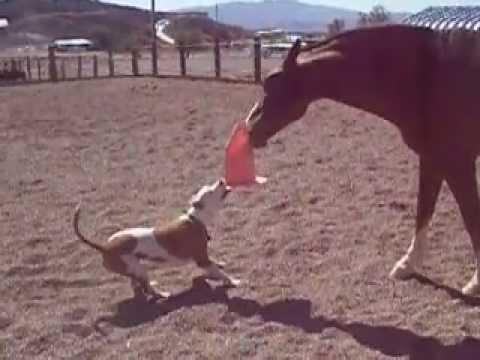 Horse Vs Pitbull: Tug Of War