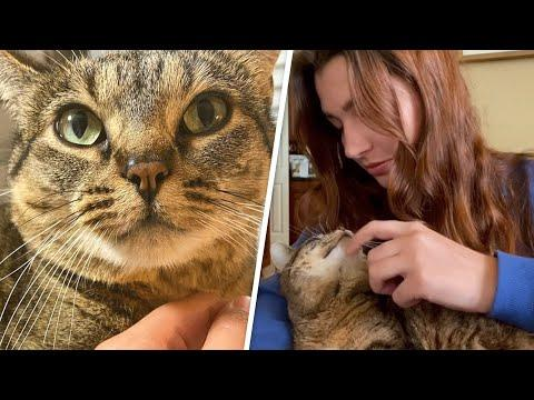 Feral cat melts in her new mom's arms #Video