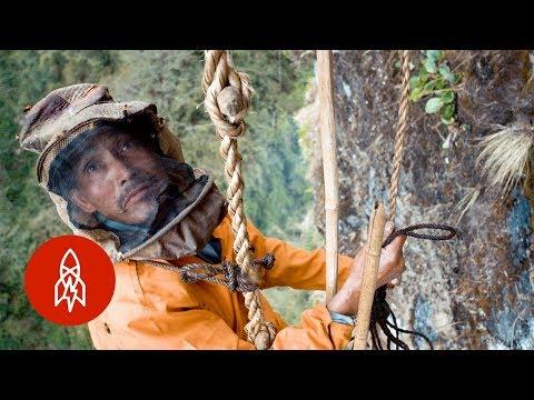 The Death-Defying Climb for Honey