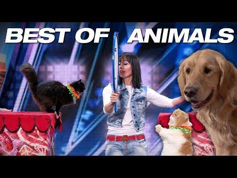 Animals Got Talent, Even Singing Dogs! - AGT 2018