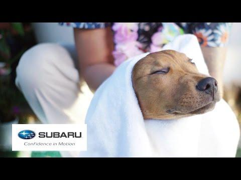 Dogs Visit A Spa For The First Time