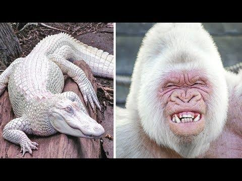 9 Most Beautiful Albino Animals