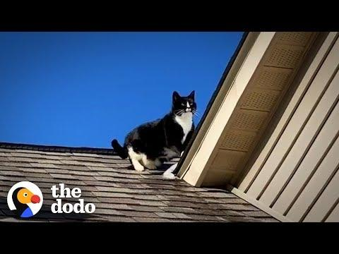 Family's Stubborn Cat Refuses To Get Off The Roof | The Dodo