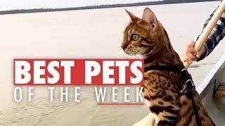 Best Pets of the Week | December 2017 Week 2