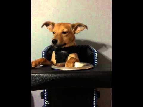 Abigail Puppy Highchair Peekaboo