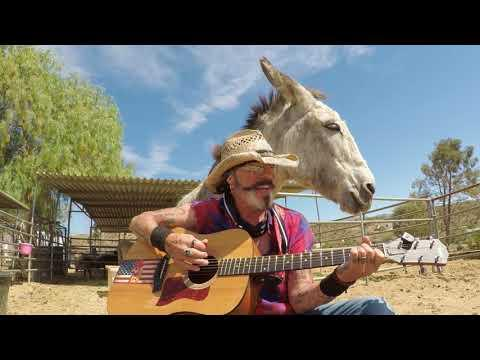 One of Hazel the Donkeys Newest Loving Video. For All the Lonely People #Video