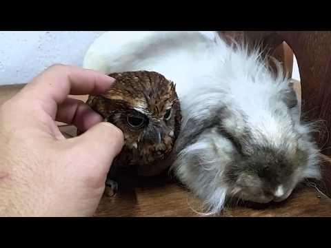 Owl And Bunny Taking A Nap