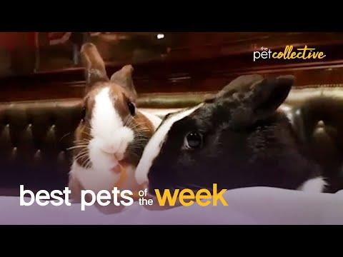 Very Romantic Rabbits Video | Best Pets of the Week