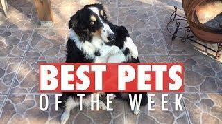 Best Pets of the Week | March 2018 Week 1